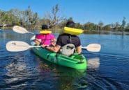 Wetlands Water Activities